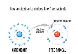 Chaga antioxidant