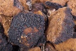 wholesale-chaga-mushroom