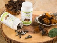 Are Chaga Capsules Effective