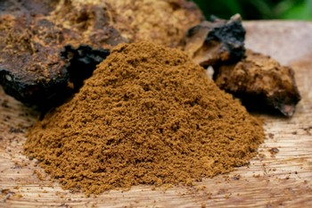 Chaga for sale