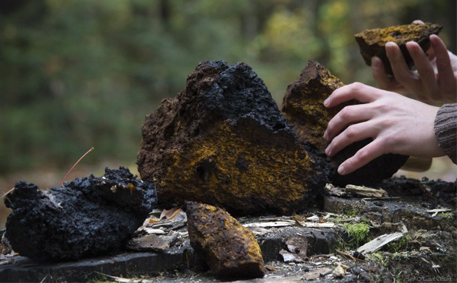 how to prepare chaga