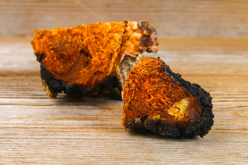 Are There any Chaga Side Effects